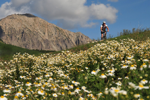 Wildflower Cycling