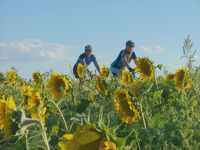 2006 Tour de Sunflowers