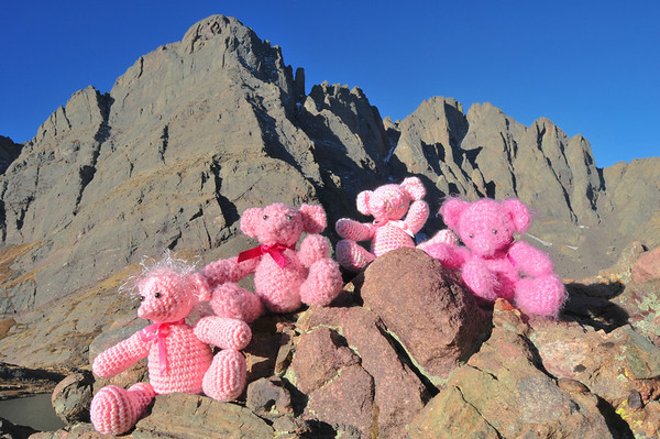 October Crestone Bears