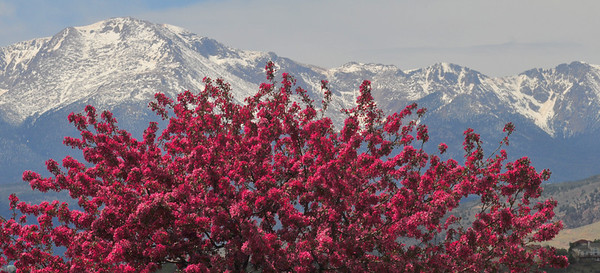 14,110 Pikes Peak and spring blossoms