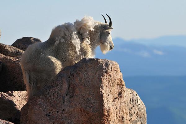 Mount Evans Lookout