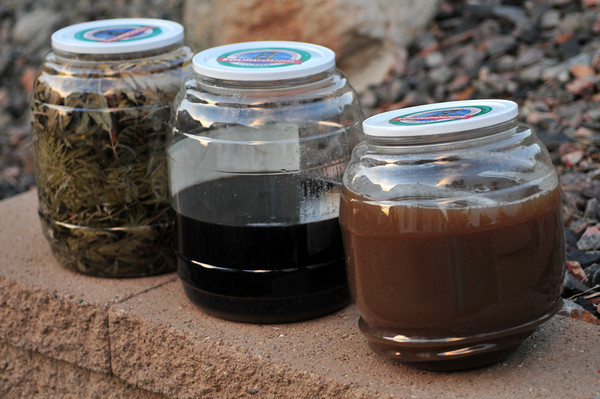 One Week of Solar Soak; sumac, tannin and past-prime curly dock