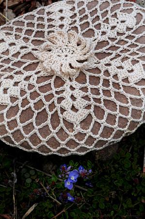 Daisyflake Rock Dwarfing Mystery Flower