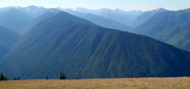 Looking south across Olympic National Park from the summit of Hurricane Ridge.