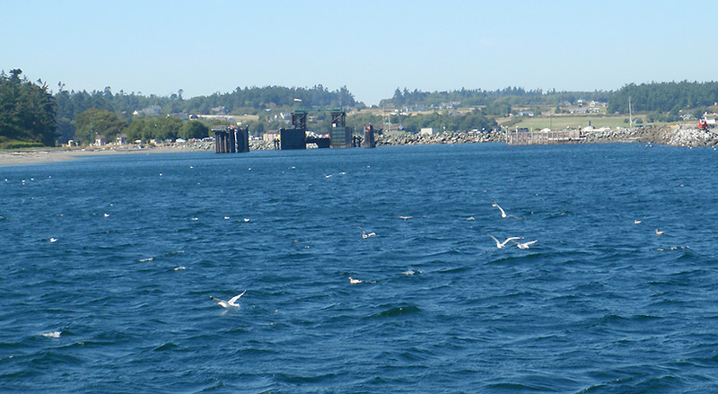 The ferry dock, sea birds and Whidbey Island, WA.