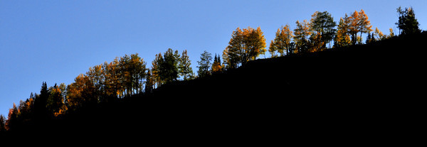 Autumn Color on Molas Pass
