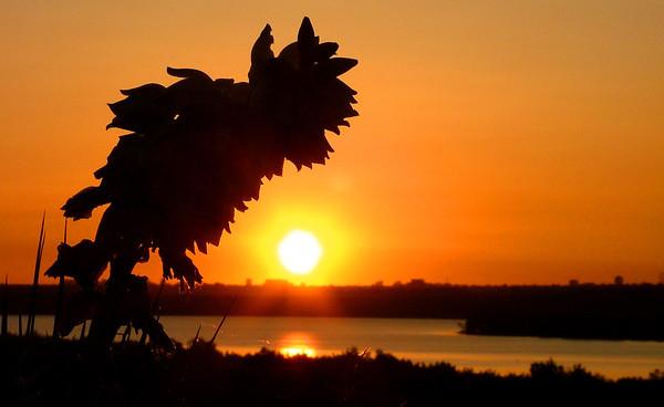 Yucca Sunrise