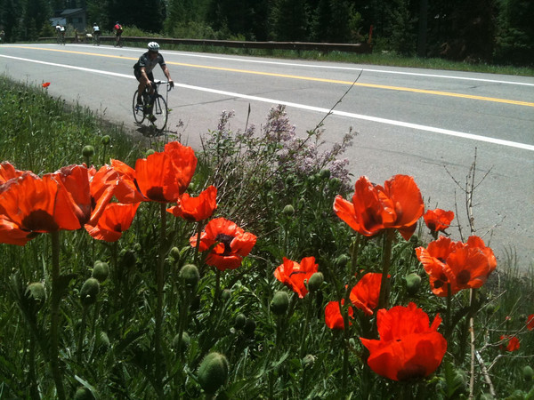Pedal through the Poppies