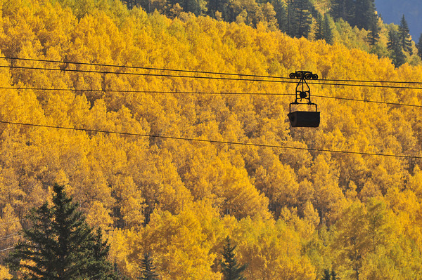 Autumn gold near Silverton