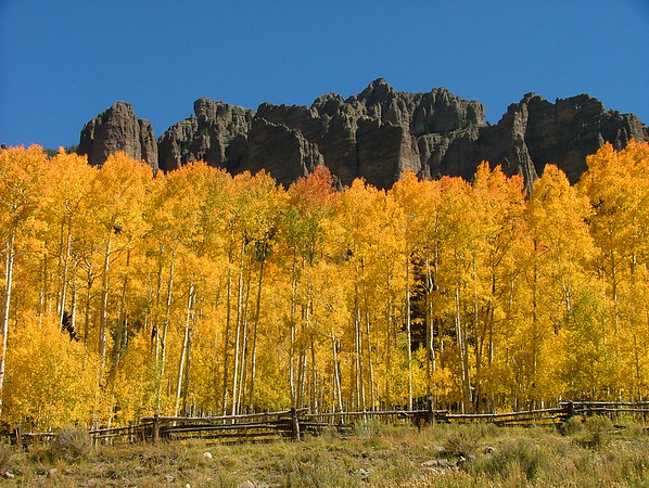 Autumn Color in the Cimarron