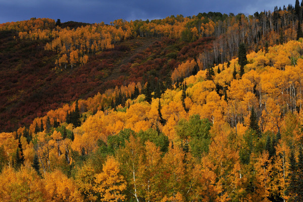 Grand Mesa in Autumn