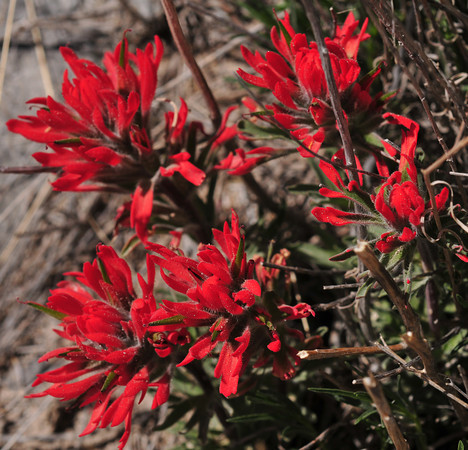 vivid paintbrush