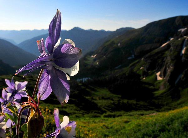 Columbine overlooking the Ice Lakes trail