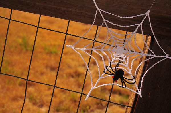 Spider Webflake