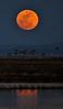 Moonrise on the Refuge